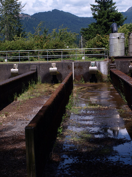 Bonneville Fish Hatchery