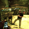 Here the trainer was throwing small bits of meat at the glass so that the Lion would come and lick it off.