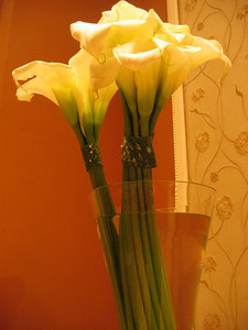I Think These Are More Calla Lilies