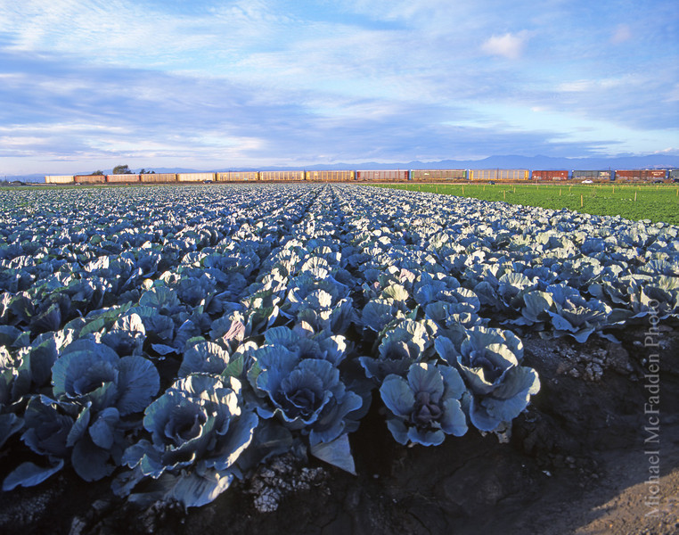 Oxnard Plain, Cabbages and a Train