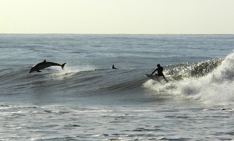 """Surfing with Dolphin at the Rincon<br /> This photo was recently purchased by The Smithsonian Natural History Museum in Washington, DC, to be part of a new exhibition with the theme: """"Our Connection to the Ocean World"""". Pretty cool, huh?"""