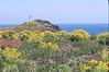 anacapa springbloom