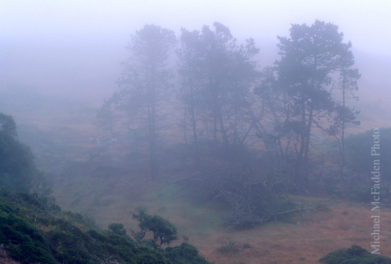 fog santa rosa island