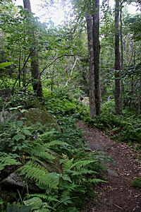 Mount Olga Trail, Molly Stark State Park, Southern Vermont