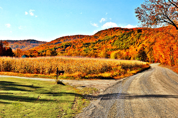 Woodstock VT - Bridges Road - Corn Field