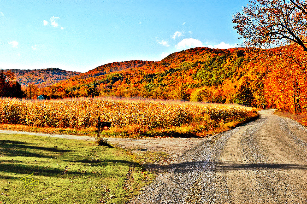 Woodstock VT - Bridges Road - Corn Field
