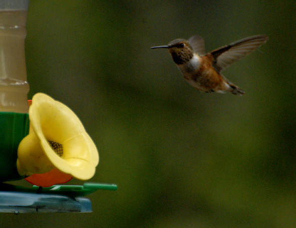 This was Bob's hummingbird feeder