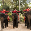 Elephants! These men were selling rides on their elephants at the Angkor World Heritage National Park