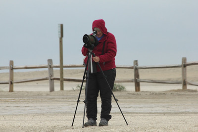October 7, 2012 - (Chincoteague National Wildlife Refuge [beach] / Chincoteague Island, Accomack County, Virginia) -- Mary Anne's looking for shorebirds