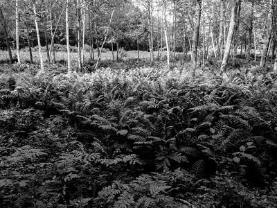 Woods at Geneva Point