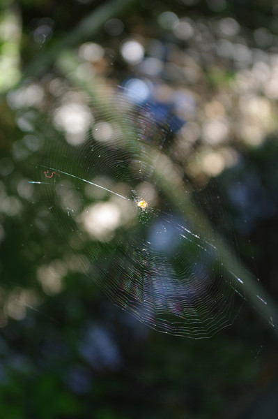 Spider web in yard day or two before we left
