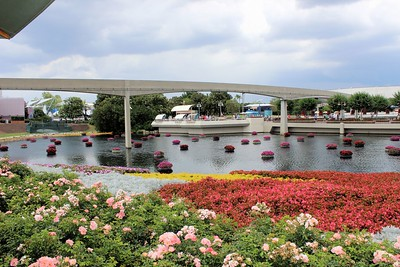 Loved all the flowers at Epcot.