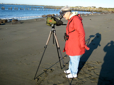 "October 4, 2009 - (Protection Island / Ocean Shores, Grays Harbor County, Washington) -- Mary Anne scoping a ""hopeful"" Yellow-billed Loon (not to be)"