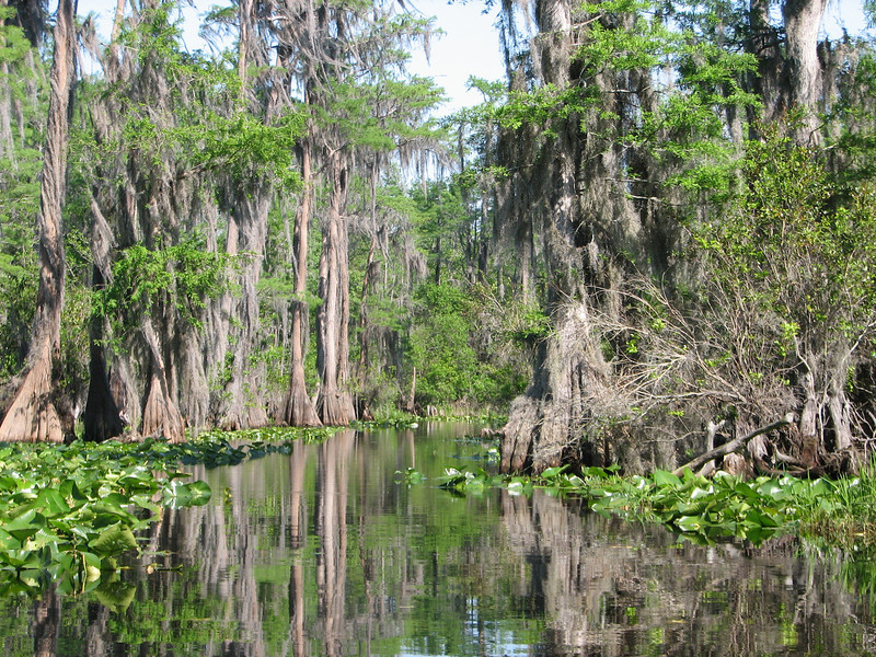 In Okefenokee Swamp heading to Billy's Island