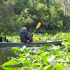 "Celia the ""Swamp Queen"" paddling through the lilies."