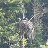 August 26, 2017 - Osprey Pair on Nest - Yellowstone NP