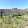 Remnants of 2011 Fire @ Nature Conservancy's Davis Mountains Preserve
