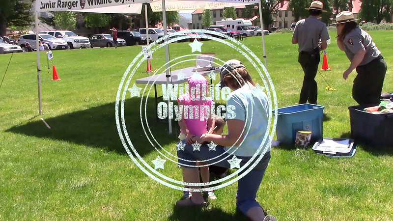 WildLife Olympics