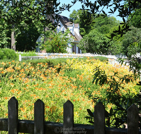Lilies at Nassau and Duke of Gloucester