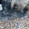 Keira's artsy photos of the smoldering fire