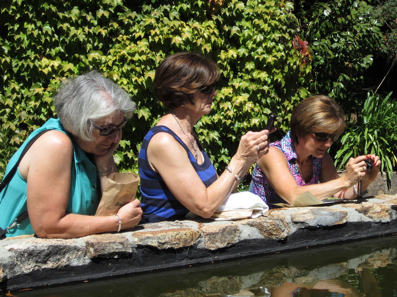 Cathy, Jean and Mary photographing Hess Collection water lilly pool