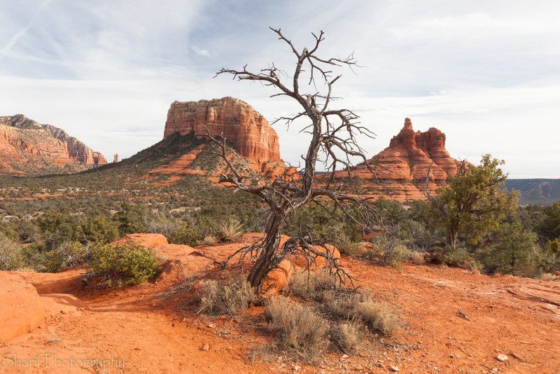 A dead tree stands in front of typical Sedona mountains. The influence of the vortex is clearly visible!