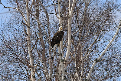 Wisc Minn vacation Apr2013 403 of 418