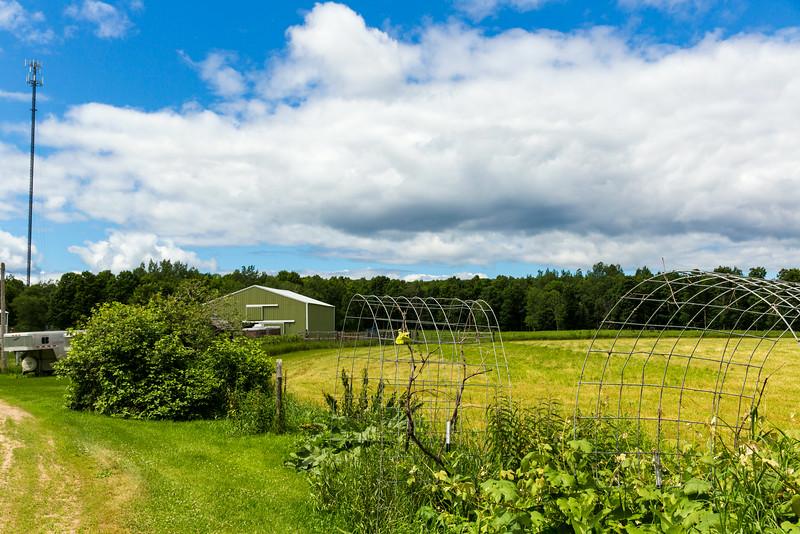 Cousin Cheryl Ann's Farm in Townsend.