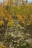A pathway of reindeer moss
