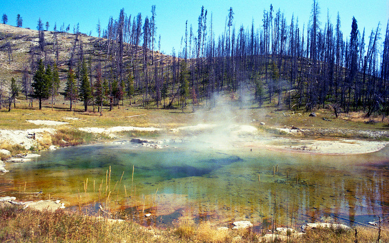 The burned trees in the background were casualties of the 1988 yellowstone fires (4 years later)