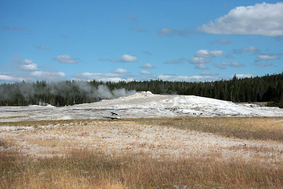 Old Faithful and Area