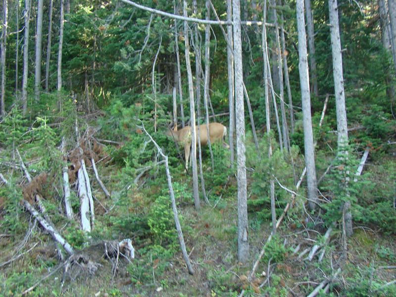 A deer along side the road.