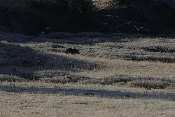 Yellowstone Day 4, Oct 4 2017