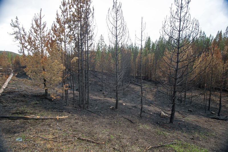 Berry Fire Aftermath Grand Teton and Yellowstone National Parks