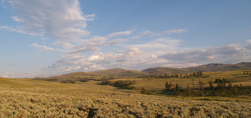 Black Tail Deer Plateau in Northern Yellowstone