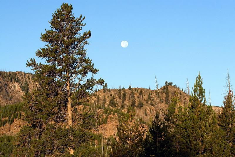 Full Moon in Yellowstone