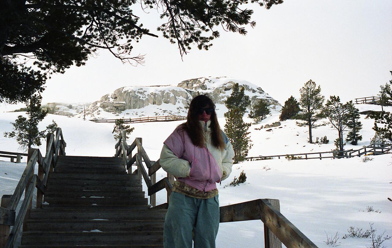 Barb near mammoth hot springs