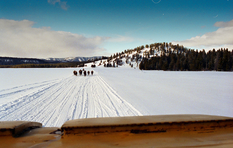 Snowcat tour in Yellowstone