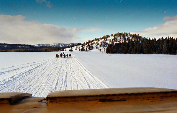 Snowcat tour in Yellowstone