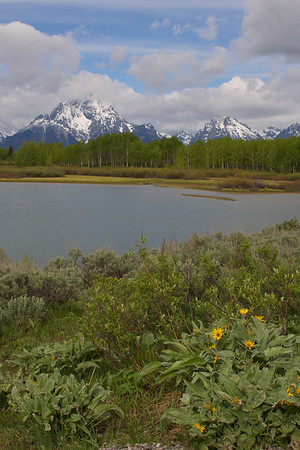 Scenic - Yellowstone/Tetons - 2007
