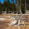 Dead treen in bacterial mats