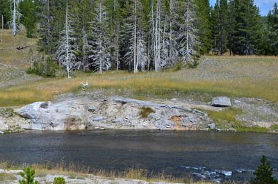 Riverside Geyser is bubbling over and about to go off.