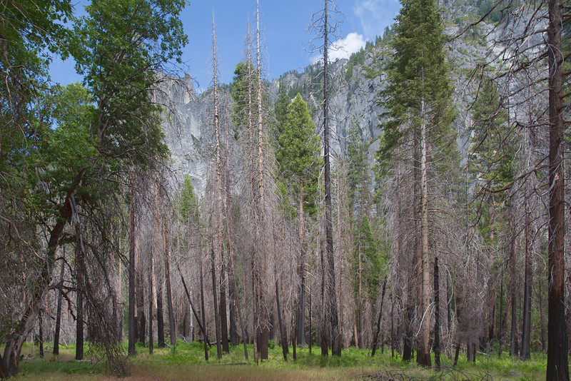 Yosemite Valley Trail