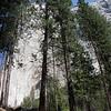 Yosemite - El Capitan