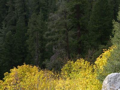 Yosemite Fall 07