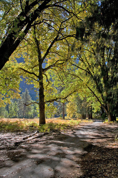 A trail in Yosemite Valley in October.