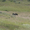 we spotted this grizzly about 7 miles from the closest road