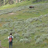 when bison were on or near trails the HUMANS get to to find another way....Bison are not interested in or phased by humans