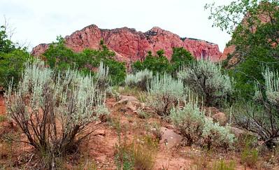 La Verkin Creek Trail, Kolob Canyon