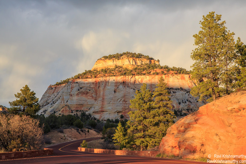 Zion National Forest